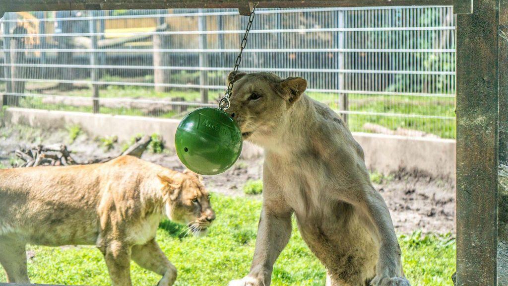gyereknap állatkert nyíregyházi állatpark