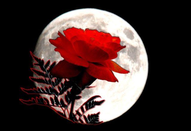 virághold telihold május bika hava skorpió hold