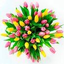 virágok személyiség teszt tulipán