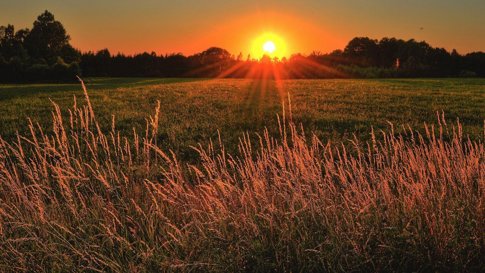 Napfelkelte, hajnal, nyár