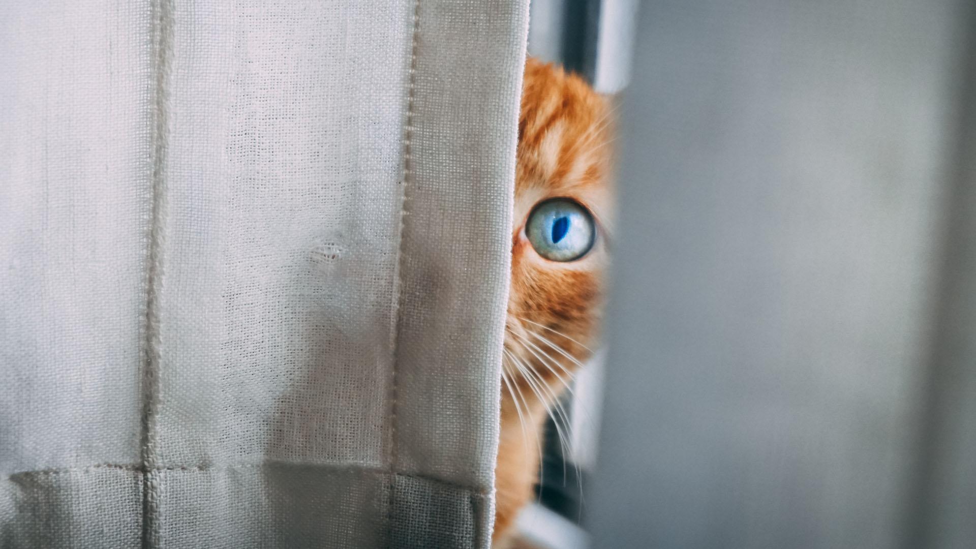 cica, macska, kismacska