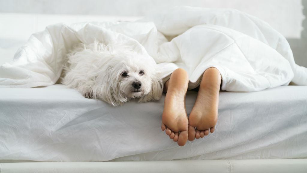 hétvége pihenés alvás ágy