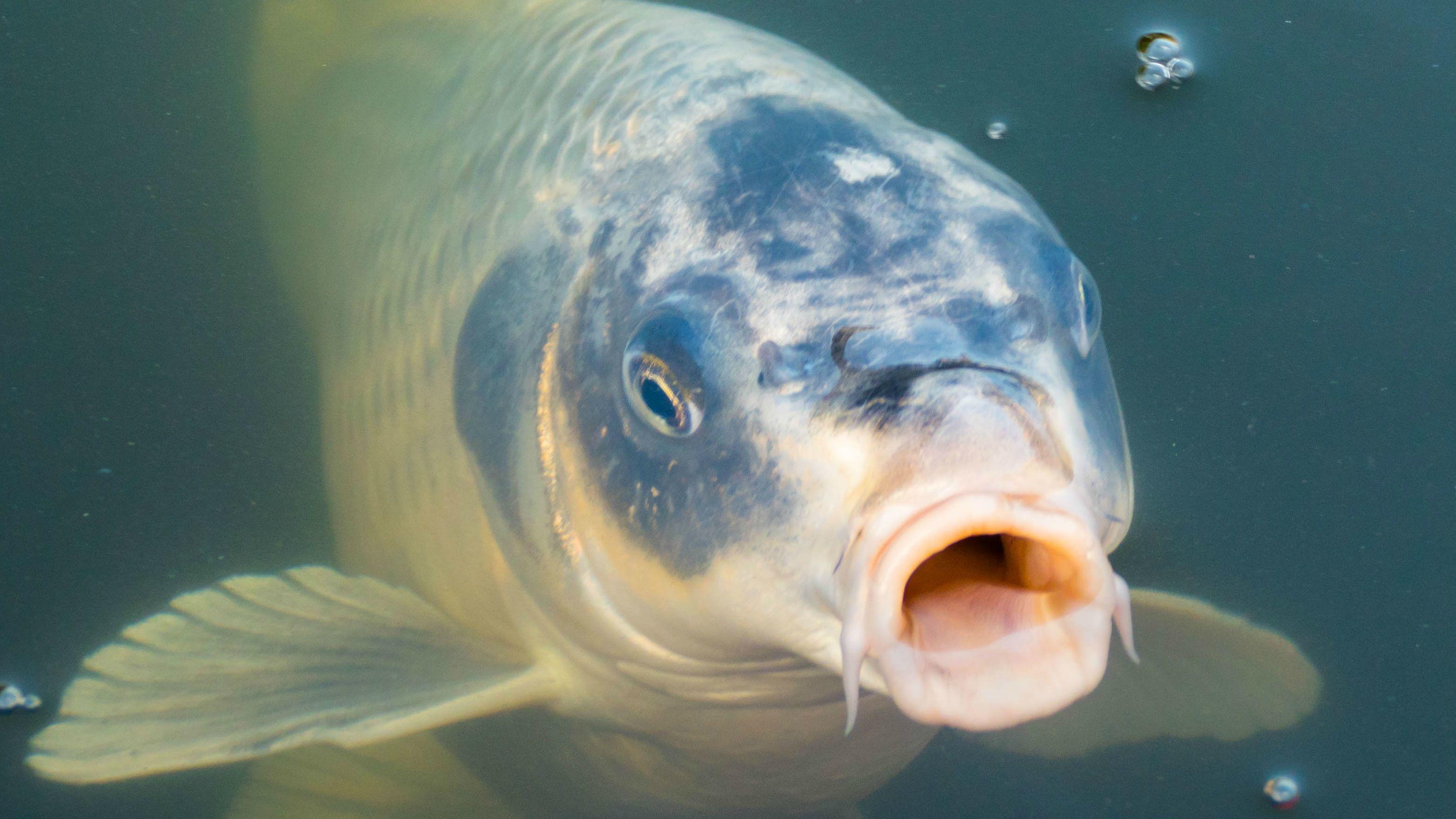Energofish horgászfelszerelés! Több 1000 termék a legkedvezőbb árakon!
