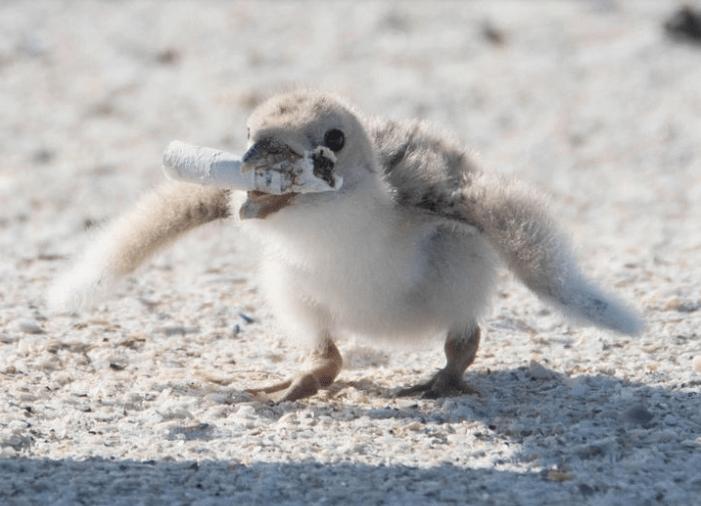 madár környezetszennyezés csikk