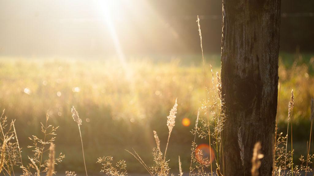 Az Országos Meteorológiai Szolgálat közleménye szerint vasárnap extrém UV-B sugárzás várható az országban, ami azt jelenti, hogy a sugárzás elérheti a 8-as szintet. A közleményből kiderül, ilyenkor normál bőrtípusnál már 15-20 perc napont tartózkodás esetén is bőrpír keletkezhet. Az OMSZ épp ezért arra kér mindenkit, fokozottan védekezzenek a napsugárzás okozta leégés ellen; ha tehetik 11 és 15 óra között kerüljék a napozást. Ami az időjárást illeti, a Kiderül előrejelzése szerint ma derült, száraz és napos idő várható. A hőmérséklet kora délután 30-35 fok között alakul, és estére is csak 20-27 fok közé hűl le a levegő.