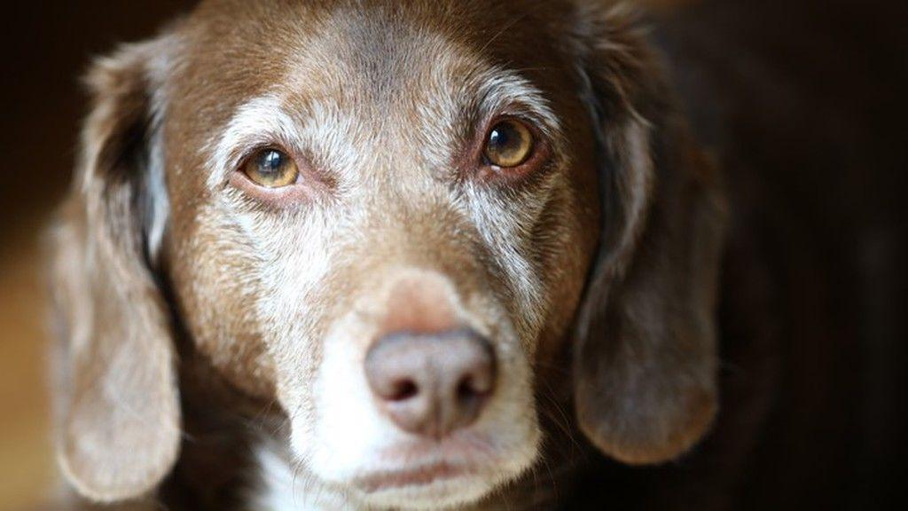 Illusztráció egy másik kutyáról (Fotó: iStock)
