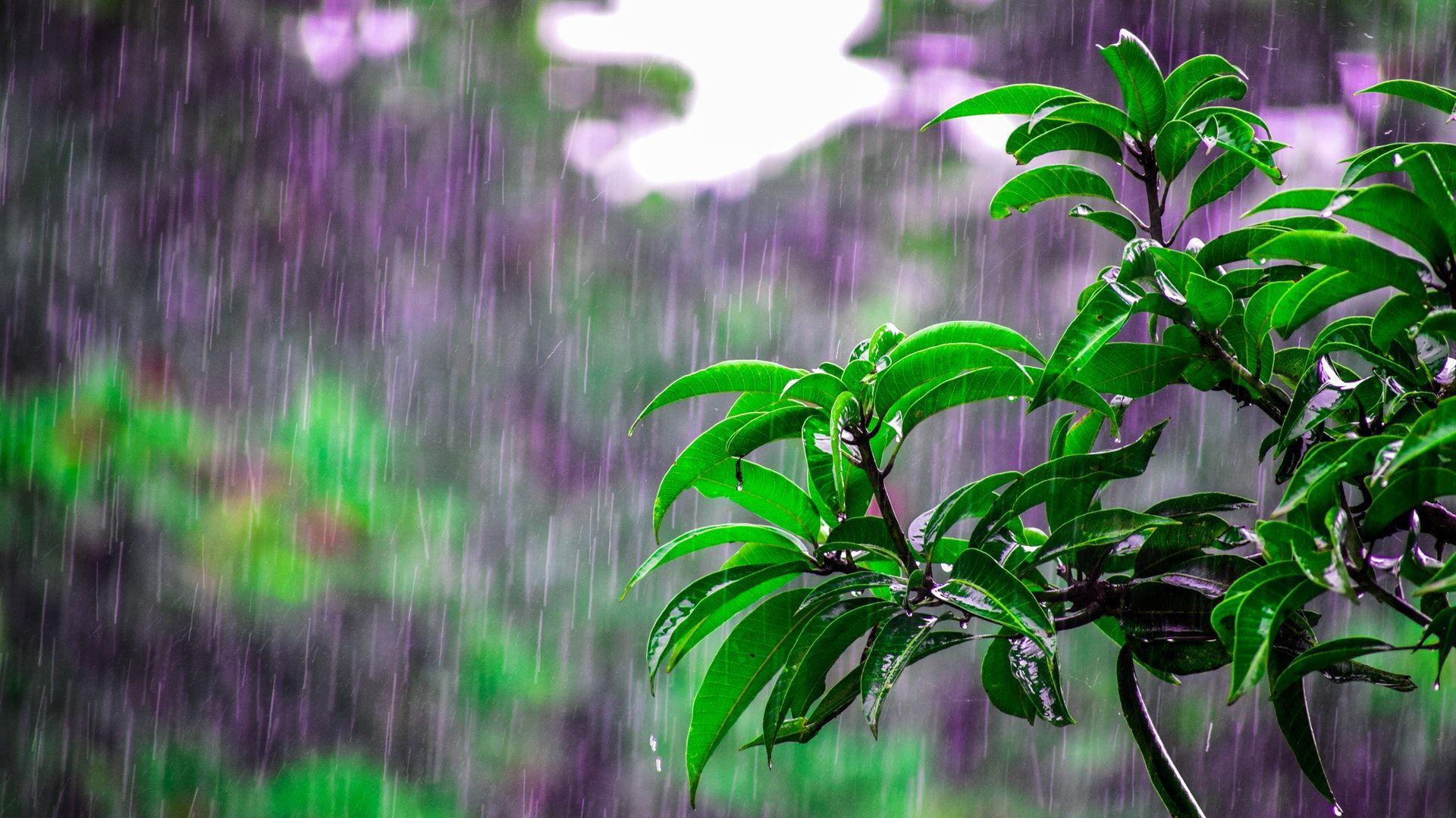 eső, égszakadás, csapadék