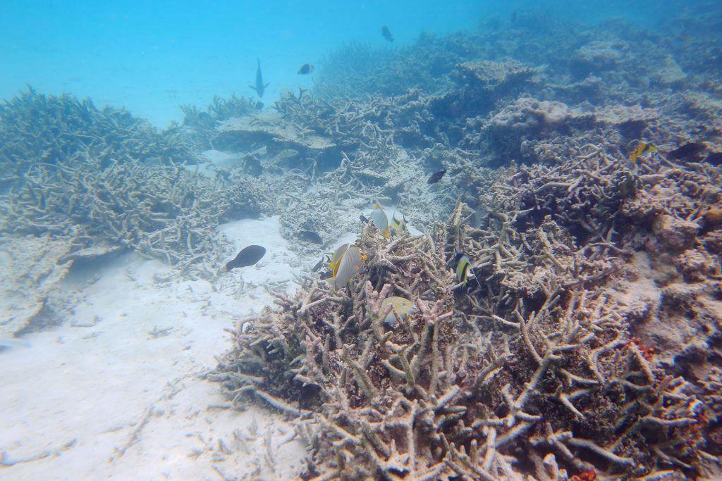 Elpusztult korallzátony-szakasz a Maldív-szigeteknél (Fotó: iStock)