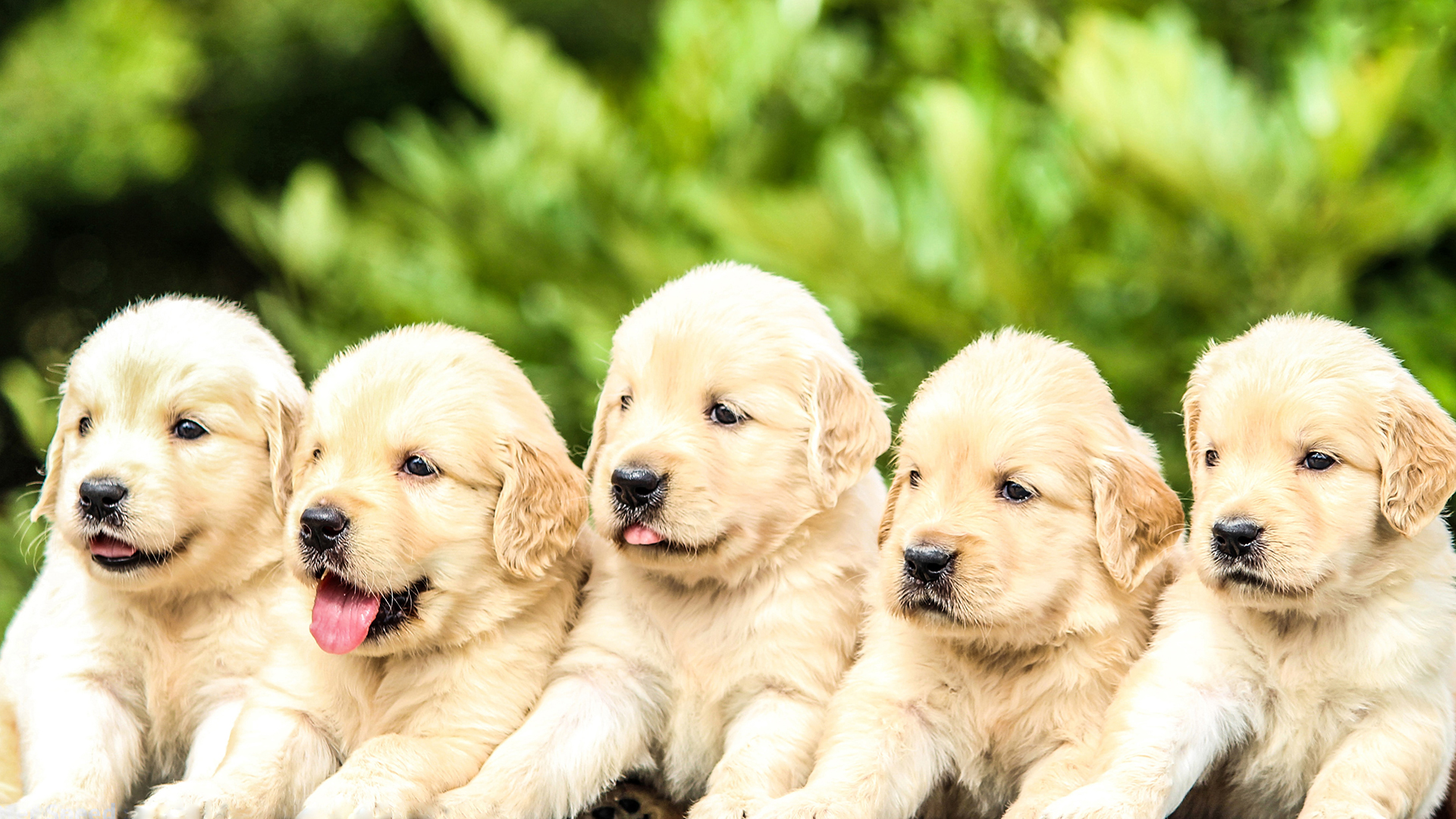 kutya, kölyökkutya, kiskutya