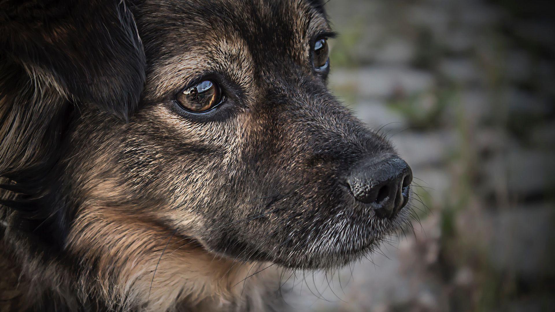 kutya, szomorú