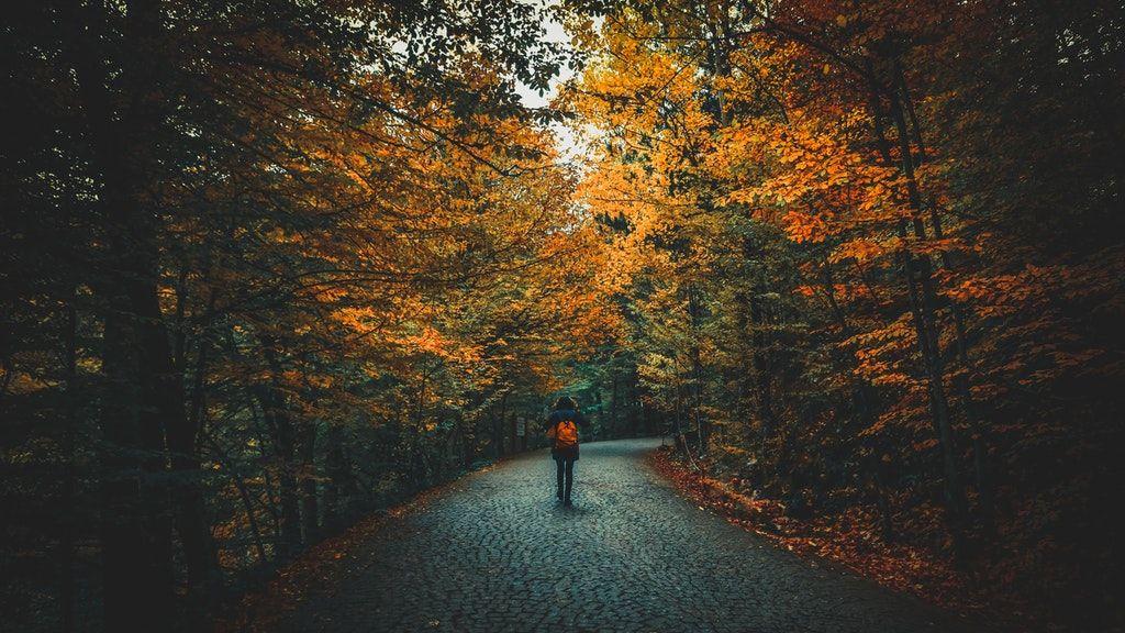ősz, színek, túra, erdő, kirándulás
