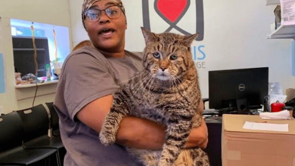 macska örökbefogadás rekord twitter