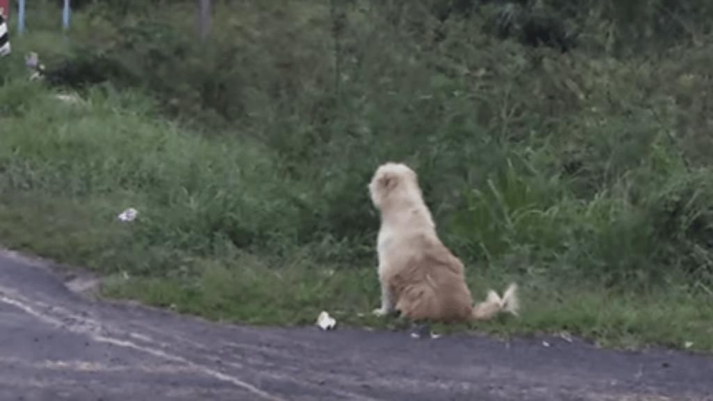 kutya hűség