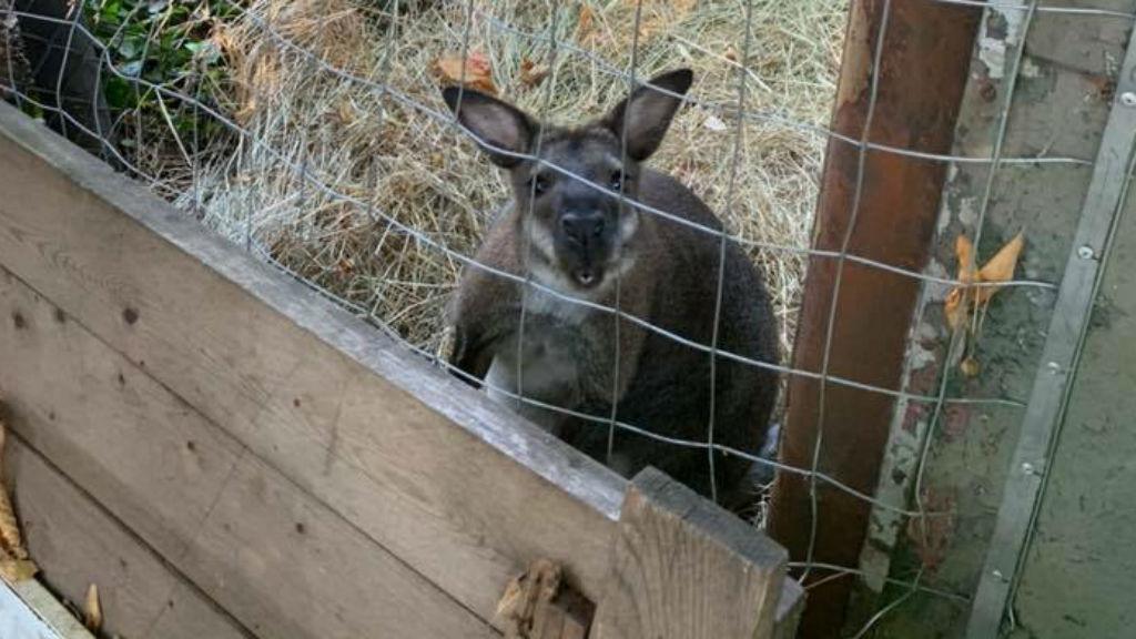 érd kenguru