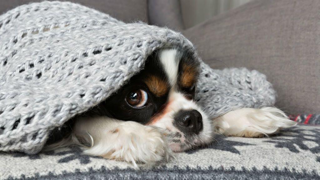 kutya fázik ősz tél fűtés