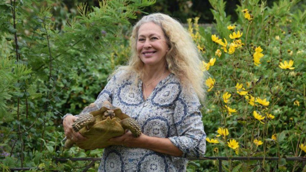 kóbor teknős