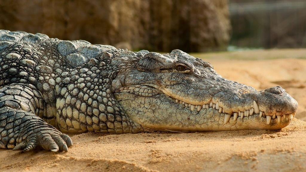 Halászni indult a férfi, krokodilok áldozata lett (Fotó: pexels.com)