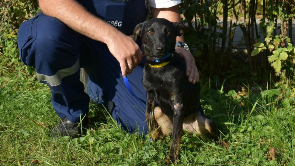 kutya örökbefogadas rendőr