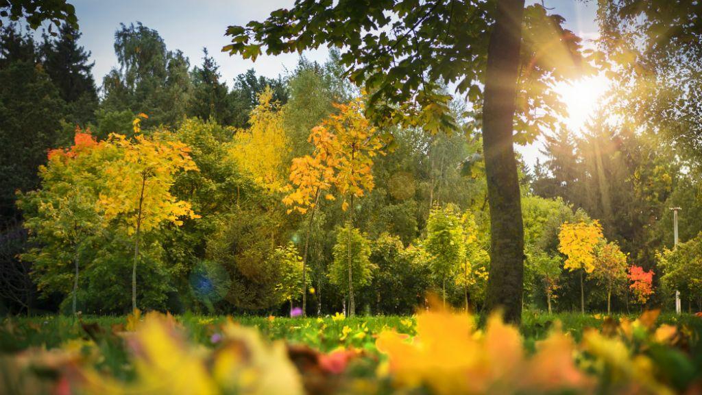 ősz napsütés