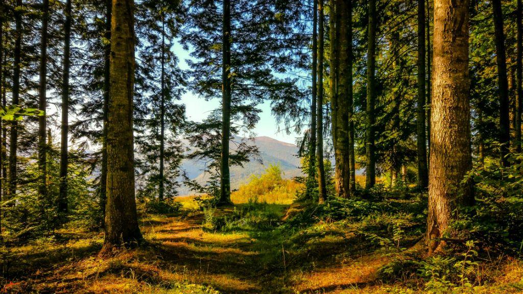 őszi erdő kárpátok
