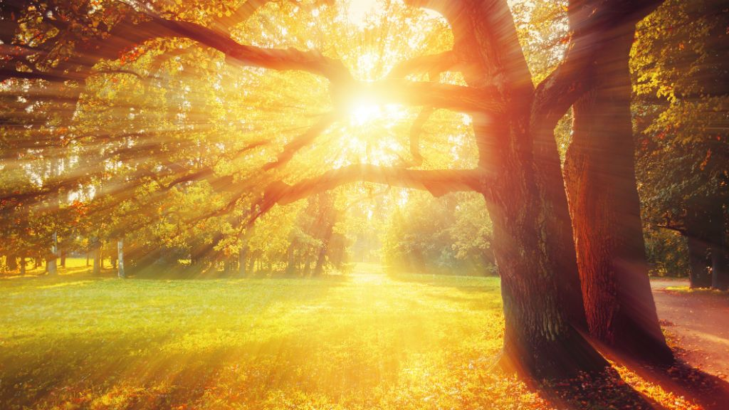 ősz napsütés vénasszonyok nyara
