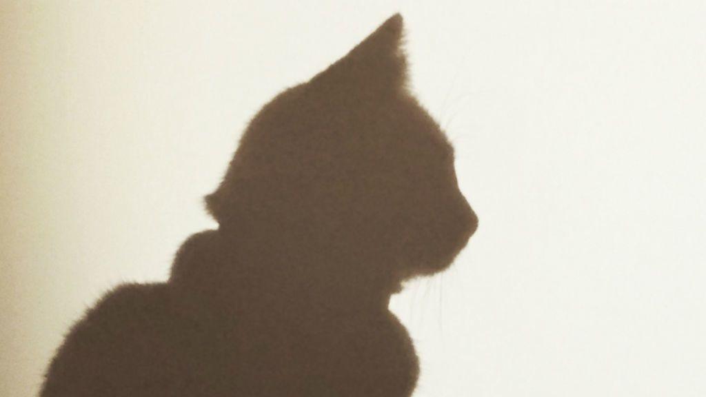 macska árnyék
