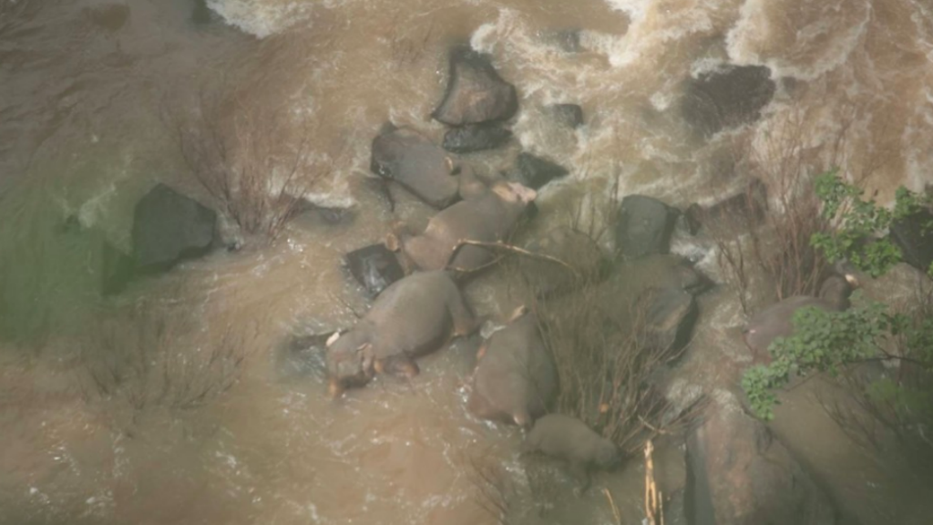 elefánt vízesés tragédia