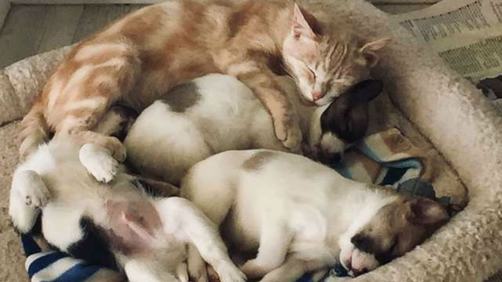 anyamacska kiskutya