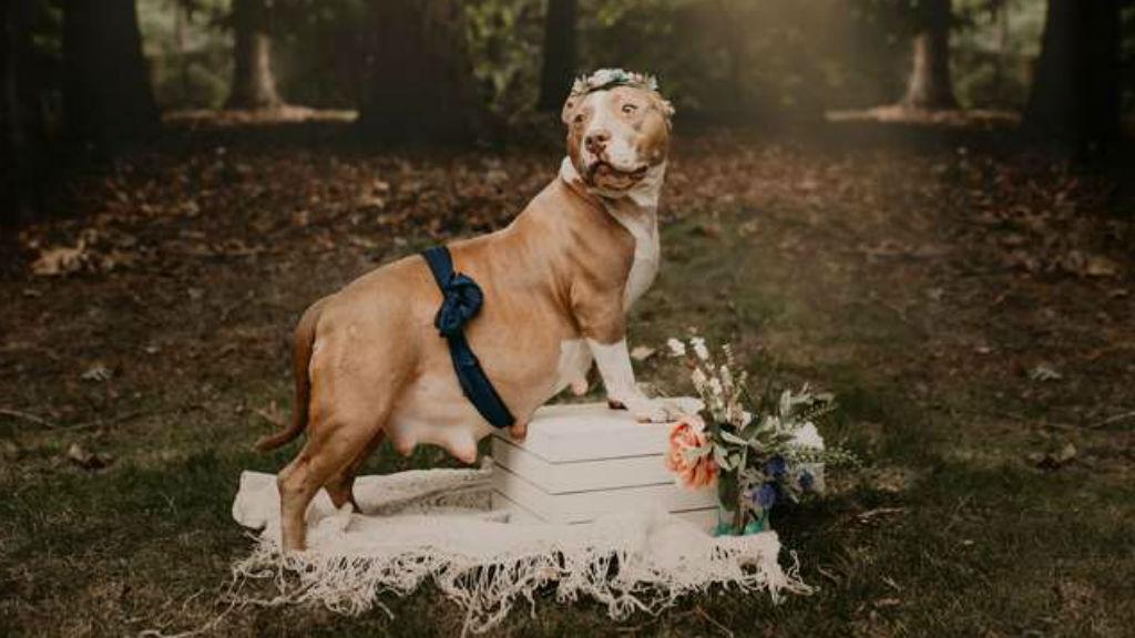 kutya terhesfotózás