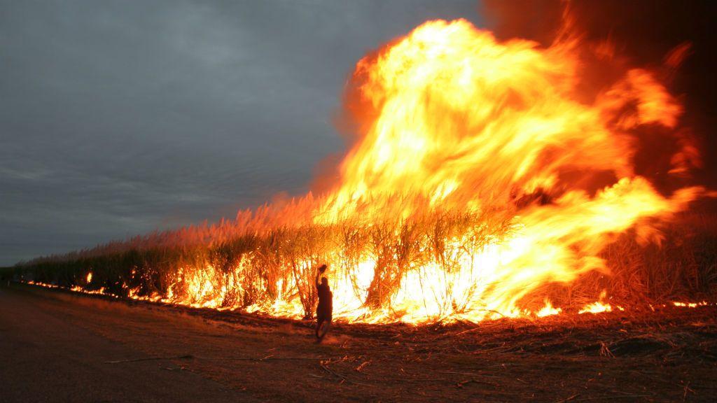 ausztrália tűz bozóttűz