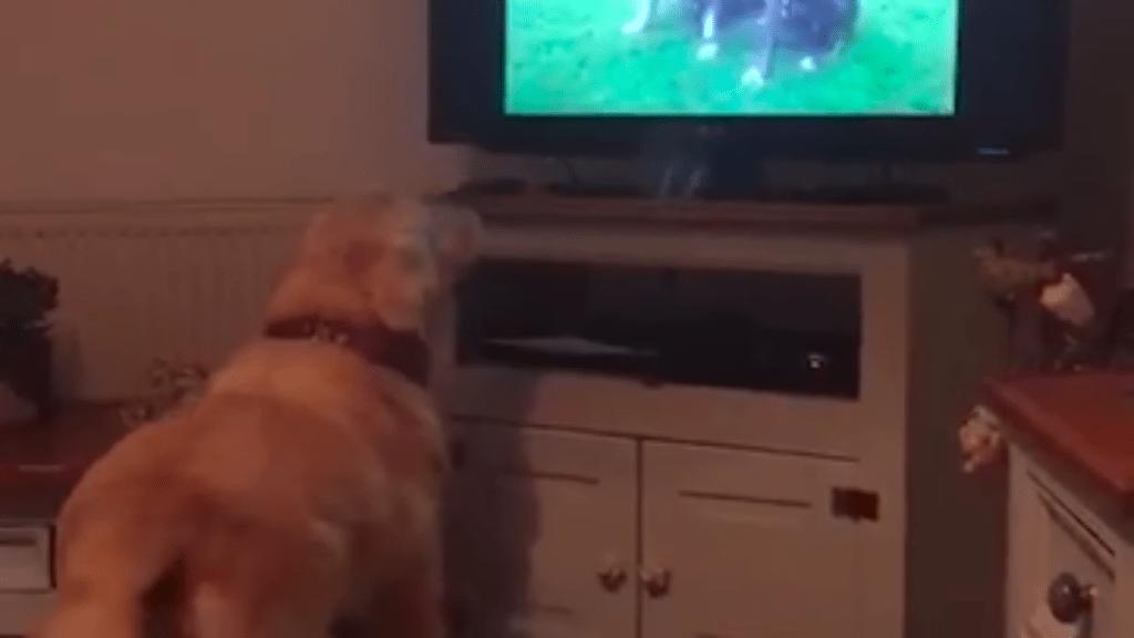 kutya megható gyász