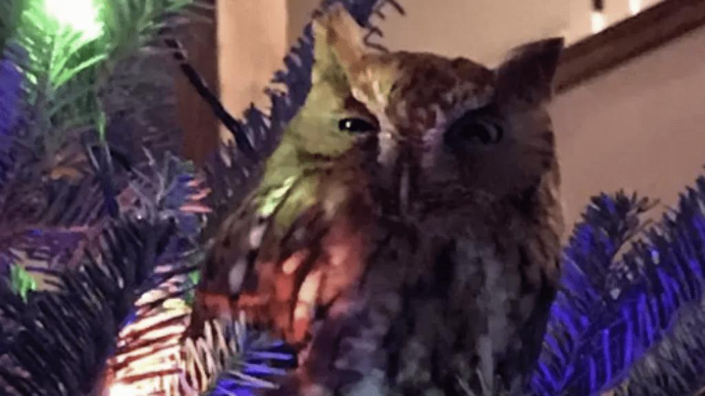 karácsonyfa bagoly