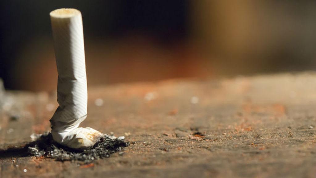 nikotin, urul szervezet