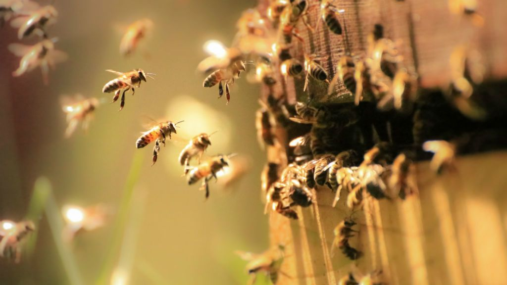 méh méhkas