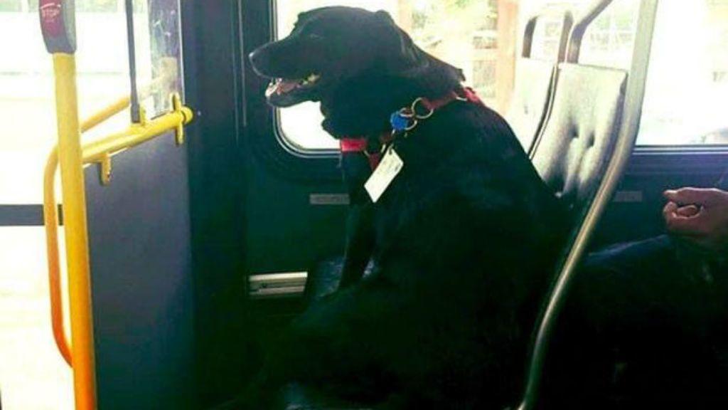 kutya busz
