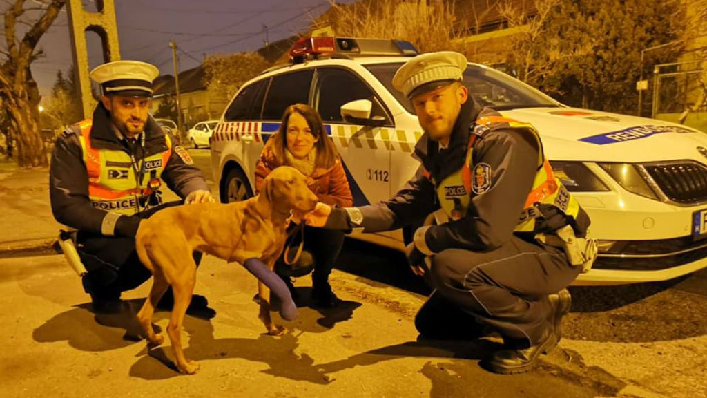 állatmentés kutya rendőrség