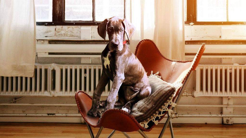 kutya fotel