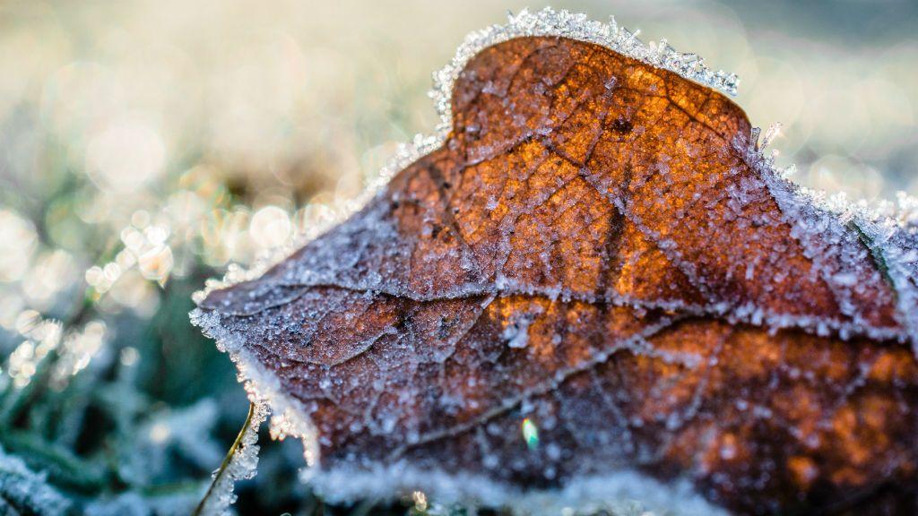száraz levél fagy tél hideg