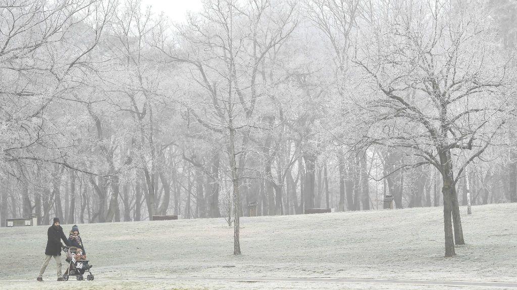 köd tél erdő debrecen
