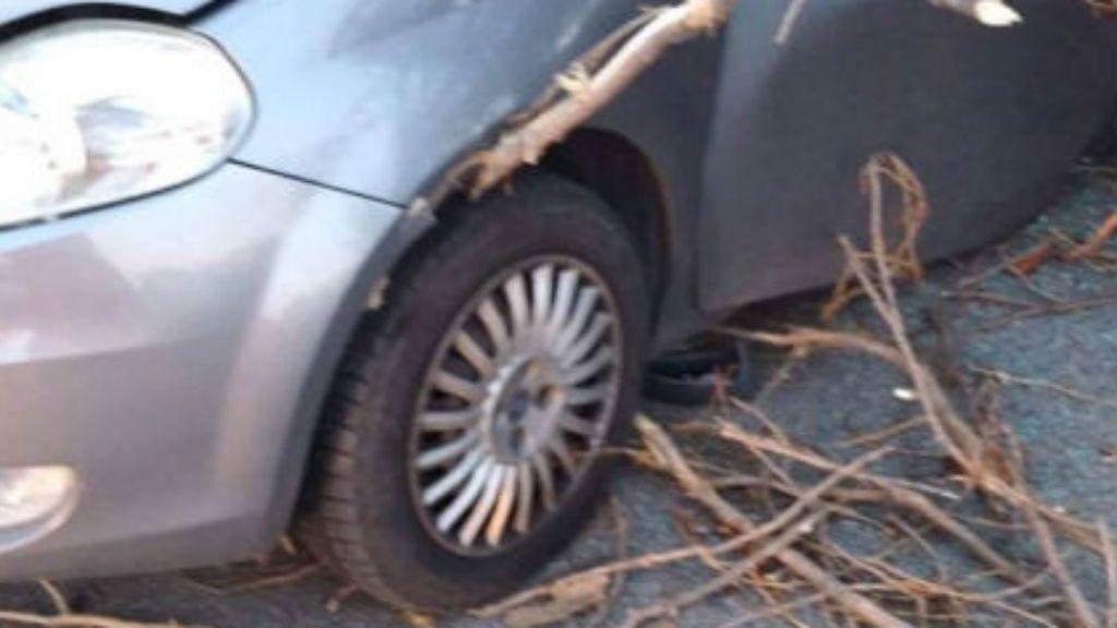 kidőlt fa baleset nemesvita