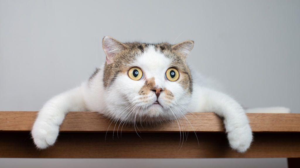 Ez a macska még valódi, de a többi... (Fotó: Getty Images)