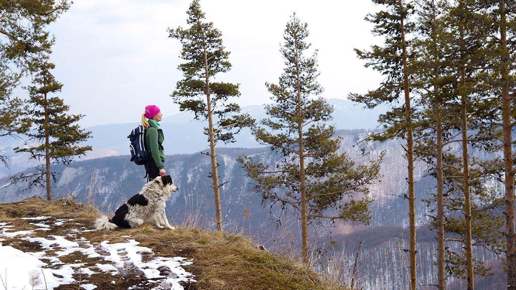 természet, kutya, gyaloglás, énidő