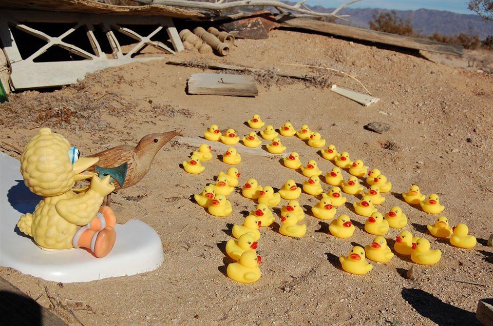 A kacsák csak látogatóba jöttek
