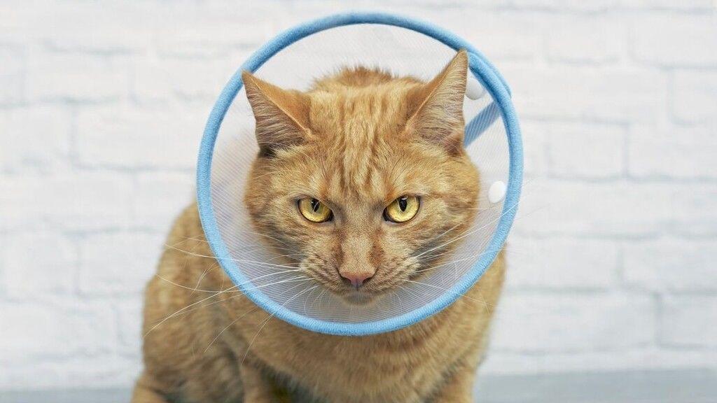 Az állatok nem veszélyesek a vírus terjedésében