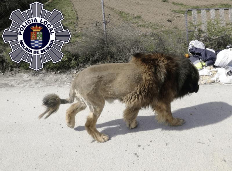 kóbor kutya oroszlán