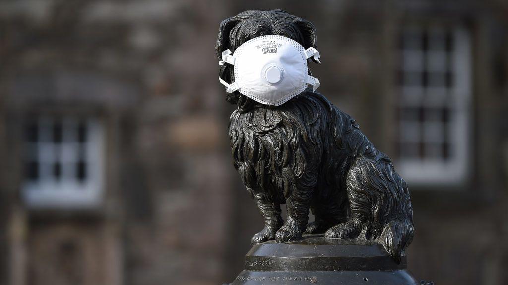 Hong Kongban egy második kutyánál is kimutatták a koronavírus jelenlétét