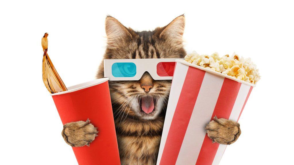 A CatVideoFest a cicás videók rajongóinak Cannes-i filmfesztiválja (Fotó: Getty Images)