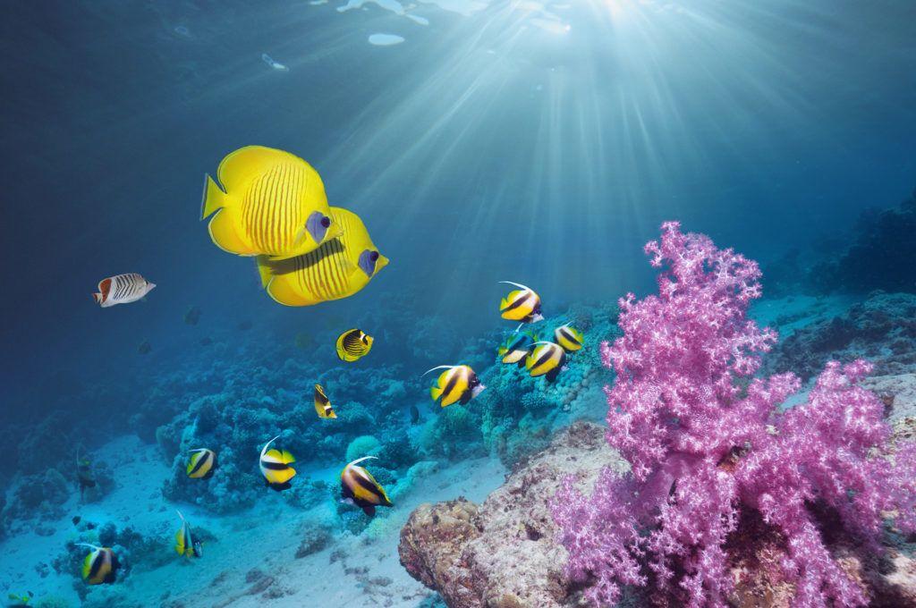 korallzátony klímaváltozás környezetszennyezés