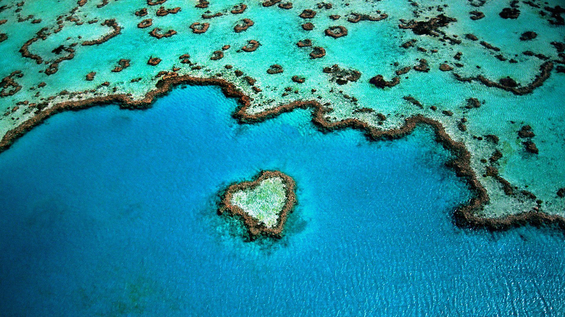 nagy korallzátony fehéredés klímaváltozás kutatás