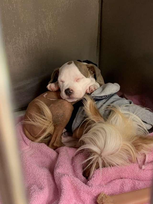 Edna alvó kutya
